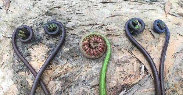 """""""Selbstanwendung"""" - Pflanzen und Formen an einem Felsen"""